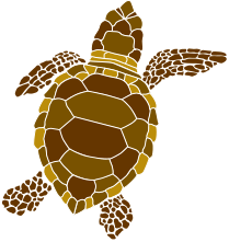 brown-turtle